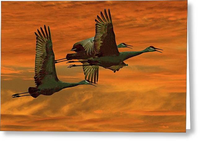 Sandhill Cranes Greeting Cards - Cranes At Sunrise Greeting Card by Larry Linton