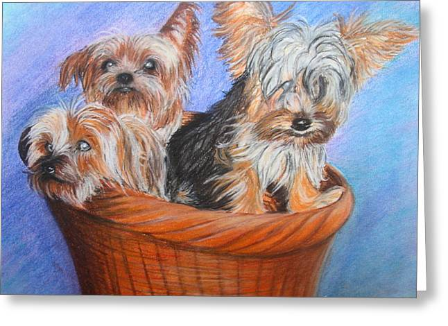 Basket Pastels Greeting Cards - 3 Yorkies in a basket Greeting Card by Tracey Hunnewell
