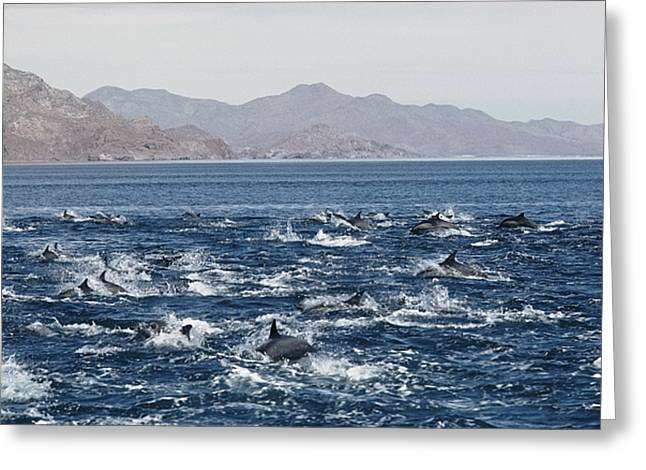 Baja California Greeting Cards - Untitled Greeting Card by Walter Meayers Edwards