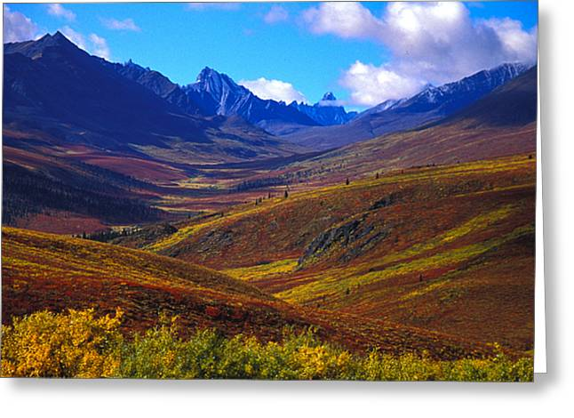 Mountain Valley Greeting Cards - A Valley Blooms With Autumn Colors Greeting Card by Nick Norman