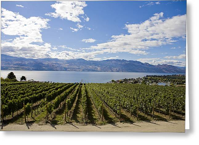 Okanagan Valley Greeting Cards - A Vineyard In Canada On A Summer Day Greeting Card by Taylor S. Kennedy