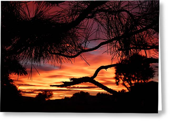 A Wishbone Sunset Greeting Card by Cindy Wright