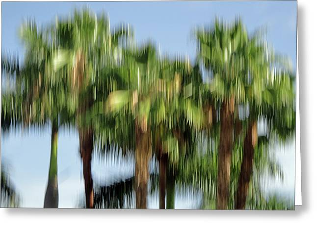 Fotografie Greeting Cards - Abstract Florida Royal Palm Trees Greeting Card by Juergen Roth