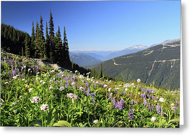 Whistler Greeting Cards - Alpine flowers on Whistler mountain Greeting Card by Pierre Leclerc Photography