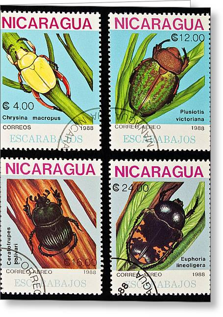 Euphoria Greeting Cards - Beetles stamps collection. Greeting Card by Fernando Barozza