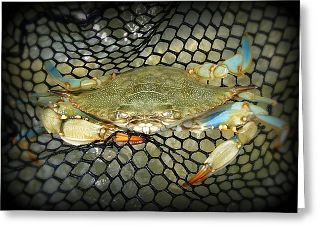 """""""crab Nets"""" Greeting Cards - Blue Crab Greeting Card by Kelly Nowak"""