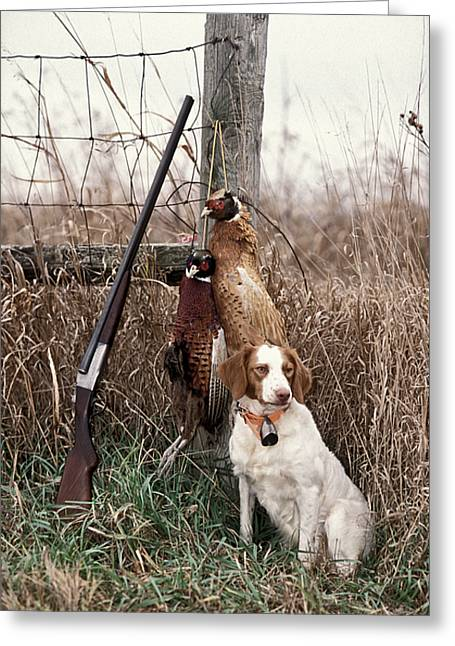 Gun Dog Greeting Cards - Brittany and Pheasants - FS000757b Greeting Card by Daniel Dempster