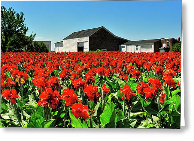 Canna Greeting Cards - Cannas Sea Red Greeting Card by Tim Doubrava