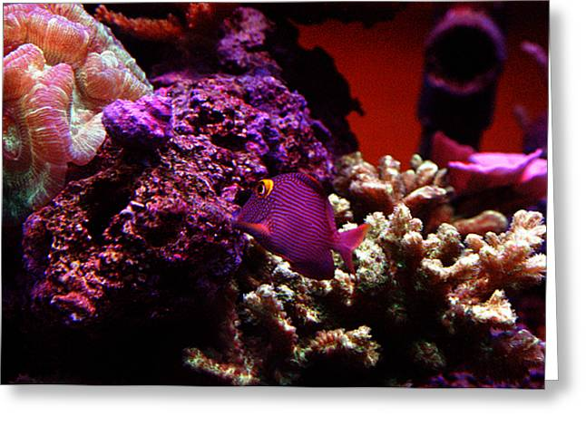 All Rights Reserved Greeting Cards - Colors of Underwater Life Greeting Card by Clayton Bruster