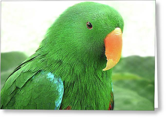 Eclectus Parrot Greeting Card by Marion Cullen