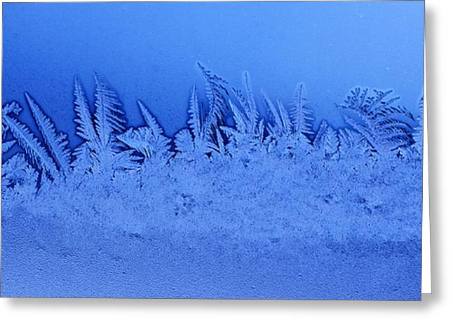 Frost Forest Greeting Card by Thomas R Fletcher