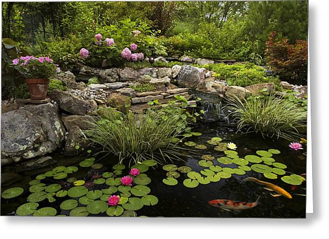 Water Lilly Greeting Cards - Garden Pond - D001133 Greeting Card by Daniel Dempster