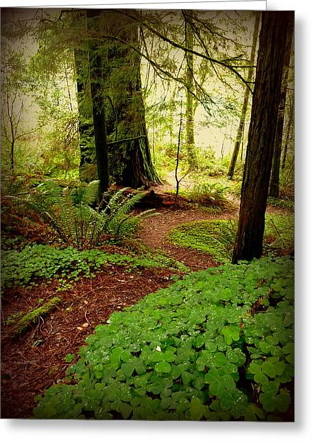 Giants Pathway Greeting Card by Cindy Wright