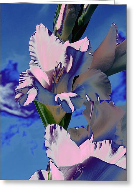 Digital Modified Greeting Cards - Gladioli Greeting Card by Heiko Koehrer-Wagner