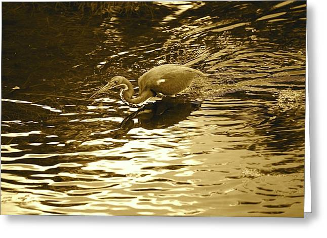 Golden Marsh Greeting Cards - Golden Sunshine and Tri-Colored Heron Greeting Card by Carol Groenen