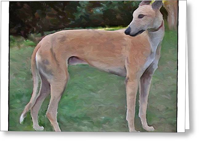 Greyt Greeting Cards - Greyhound Standing Rendered 103 Greeting Card by Terry Mulligan