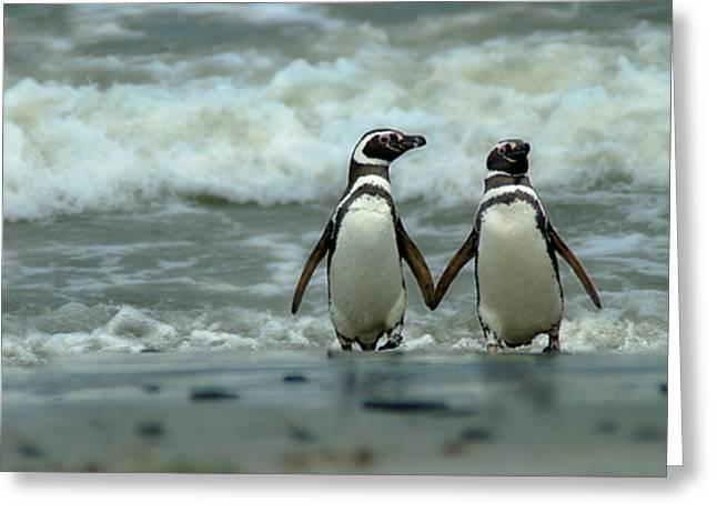 Falklands Greeting Cards - Hand In Hand Greeting Card by Mark H Roberts