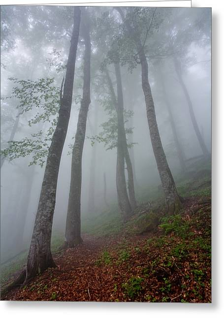 Fog Mist Greeting Cards - High Forest Greeting Card by Evgeni Dinev