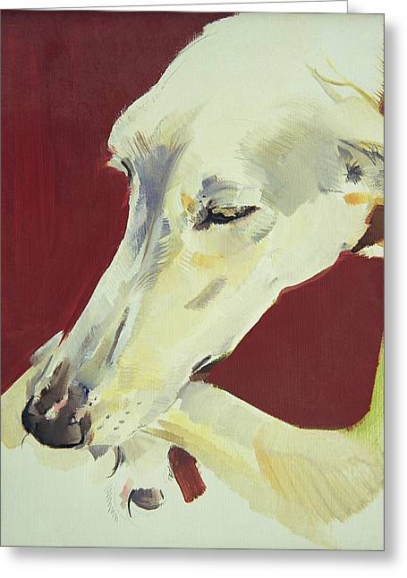 White Dogs Greeting Cards - Jack Swan I Greeting Card by Sally Muir
