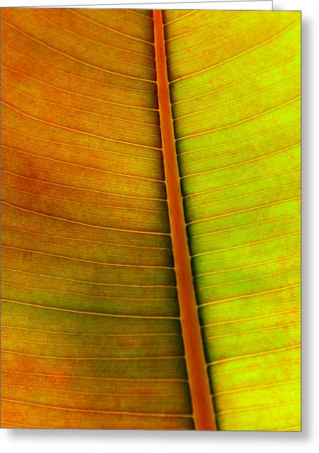 Abstract Nature Greeting Cards - Leaf Pattern Greeting Card by Carlos Caetano