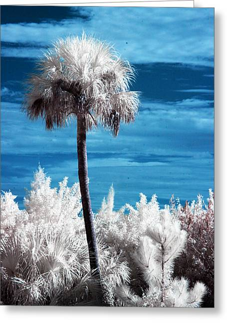 Surreal Landscape Greeting Cards - Lonesome Palm Greeting Card by Bob Pomeroy