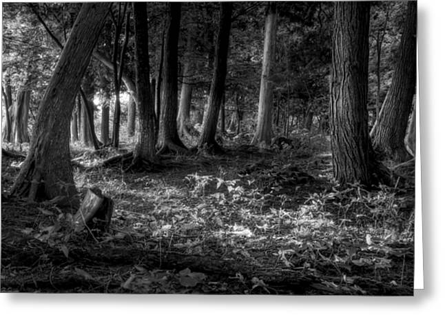 Magical Greeting Cards - Magical Forest Greeting Card by Scott Norris