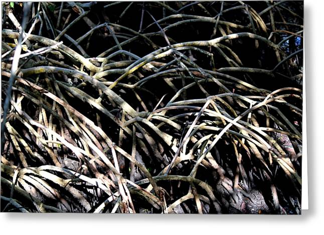 Thick Roots Greeting Cards - Mangrove Macrame Greeting Card by Theresa Willingham