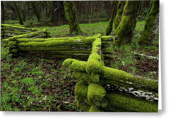Mossy Fence 4 Greeting Card by Bob Christopher