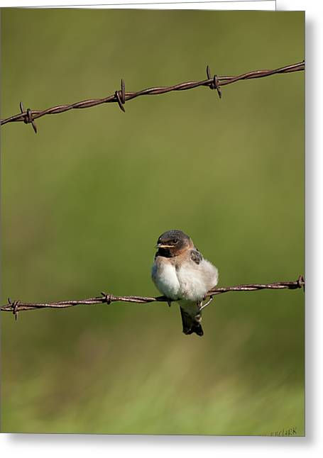 Juveniles Greeting Cards - No Boundries Greeting Card by Reflective Moment Photography And Digital Art Images