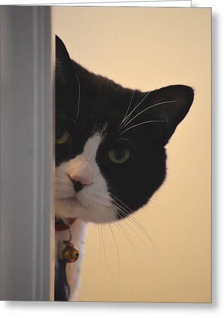 Oreo Photographs Greeting Cards - Peek-a-boo Greeting Card by James E Weaver