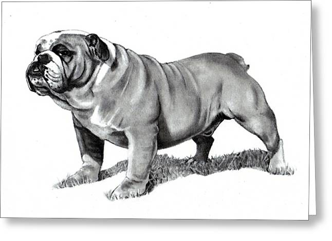 Joyce Geleynse Greeting Cards - Pencil Drawing of a Bulldog Greeting Card by Joyce Geleynse