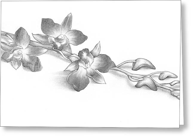 Pencil Drawing Of Orchid Flowers Greeting Card by Evelyn Sichrovsky