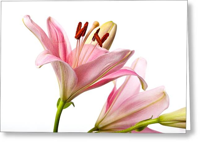 Pink Lilies 03 Greeting Card by Nailia Schwarz