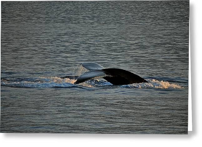 Save The Whales Greeting Cards - Places To Go Greeting Card by Donna Shahan