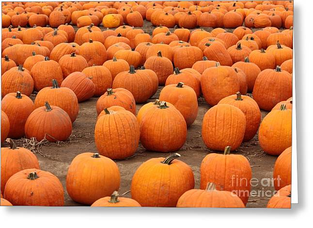 Pumpkins Waiting For Homes Greeting Card by Carol Groenen