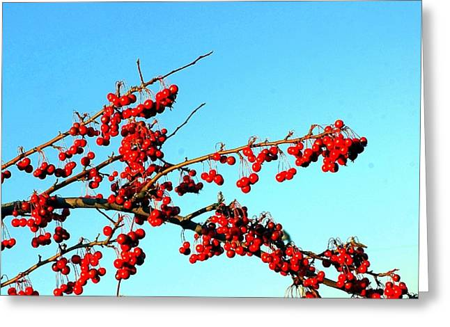 Cook Book Photo Greeting Cards - Red Berries Greeting Card by Kathleen Struckle