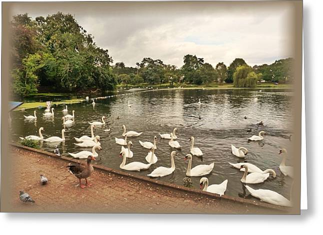 Wales Prints Greeting Cards - Roath park and Lake Greeting Card by Andrew Read