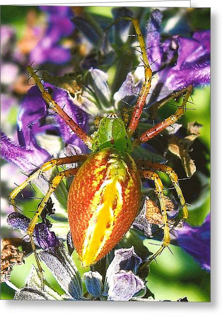 Scary Spider Greeting Card by Janet Pugh