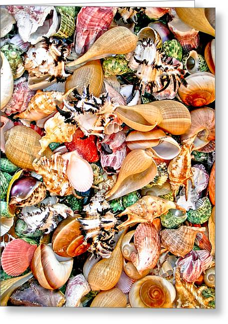 Cone Shells Greeting Cards - Sea Shells Greeting Card by Jim DeLillo