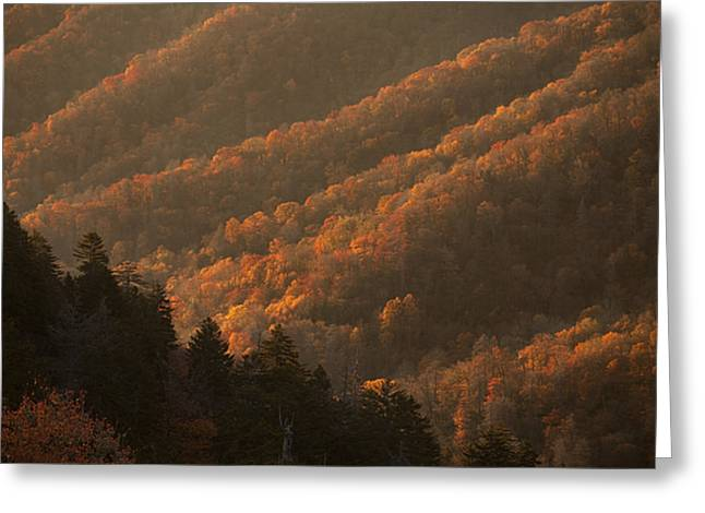 National Park Greeting Cards - Smokies Hillside at Autumn Greeting Card by Andrew Soundarajan