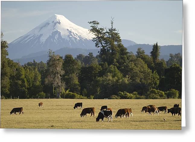 Snow-capped Osorno Volcano Greeting Card by Abraham Nowitz