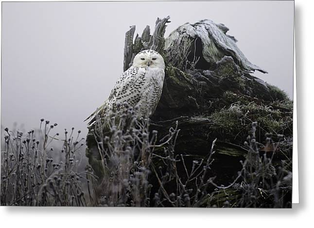 Snowy Owl Greeting Cards - Snowy Owl in the Fog 1 Greeting Card by Andrew Campbell