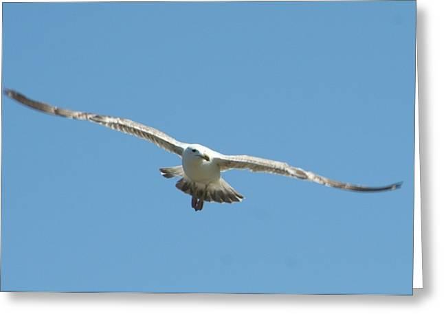 Ocean Photography Greeting Cards - Soaring Greeting Card by Barbara S Nickerson