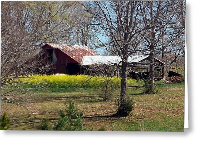 Tin Roof Greeting Cards - Spring In The Barn Yard Greeting Card by Kay Sawyer