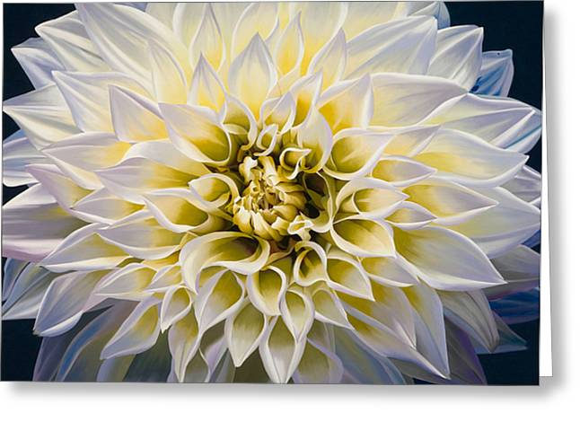 White Flowers Paintings Greeting Cards - Sunrise Greeting Card by Sharon Von Ibsch