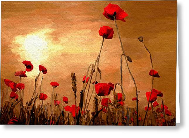 Sunset Poppies Greeting Card by James Shepherd