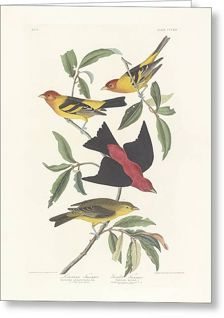 Wild Life Paintings Greeting Cards - Tanagers Greeting Card by John James Audubon