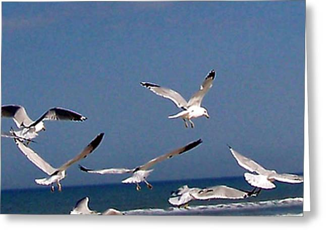 Flying Seagull Greeting Cards - The Beauty of Flight Greeting Card by Patricia Taylor