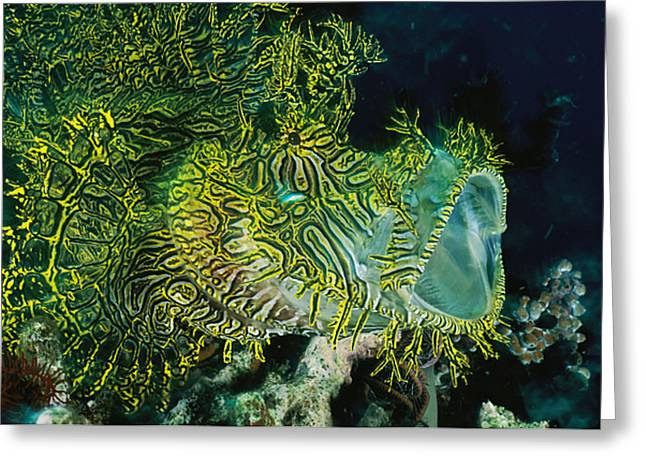 Aquatic Animal Greeting Cards - The Gaping Mouth Of A Merlets Scorpion Greeting Card by David Doubilet