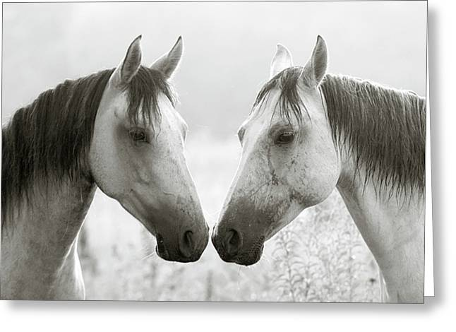 Gray Horse Greeting Cards - The Greys Greeting Card by Ron  McGinnis
